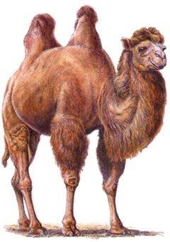 Легче верблюду пройти сквозь игольное ушко, чем богачу войти в царствие небесное