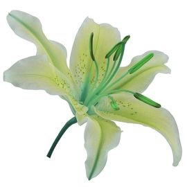 Цветок душистых прерий