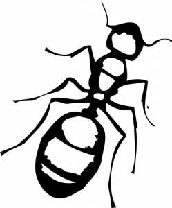 Уникальность муравьев