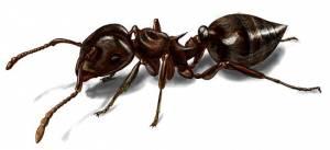 Золото Бактрии и муравьи-убийцы